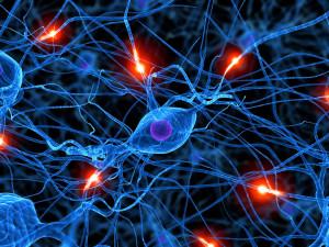 photo-synapse